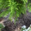 街路の鉢植え(上)