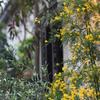 玄関回りの花