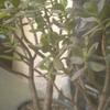 庭、その2