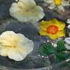 水に浮かぶ花