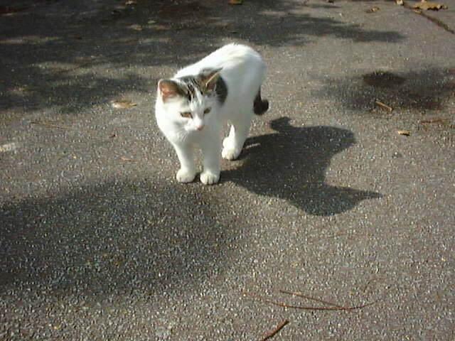 沖縄で出会った猫