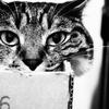 箱とスーツケースと猫日和