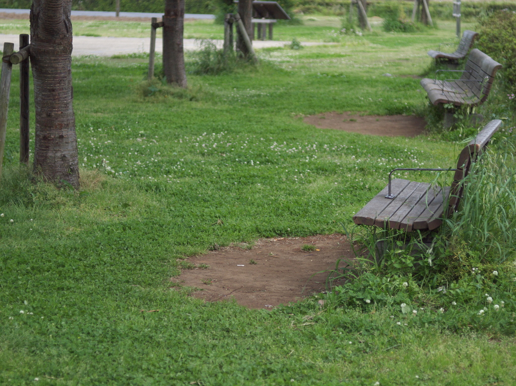 green and benches