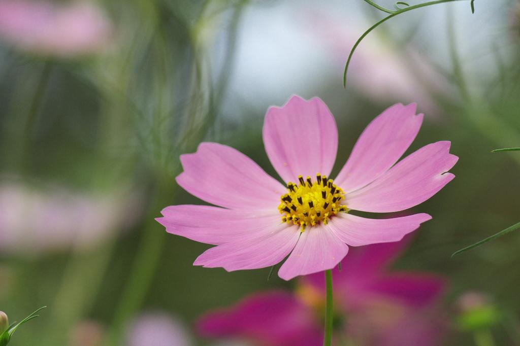 庭先の小さい秋(1)