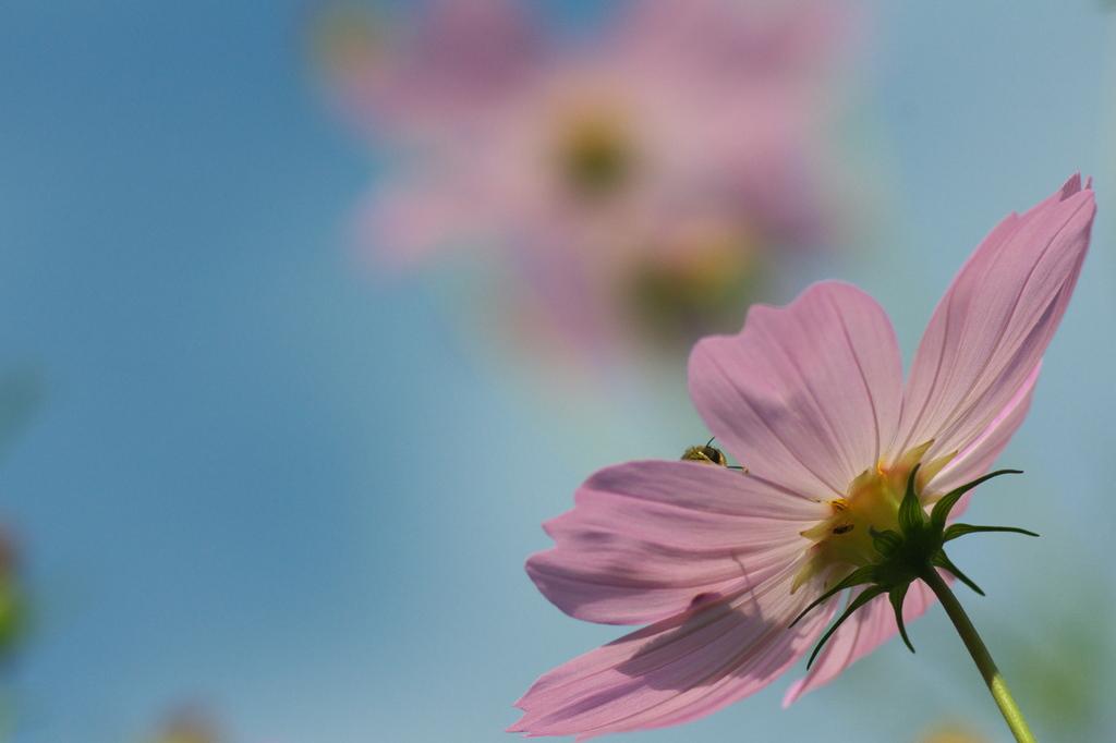 庭先の小さい秋(3)