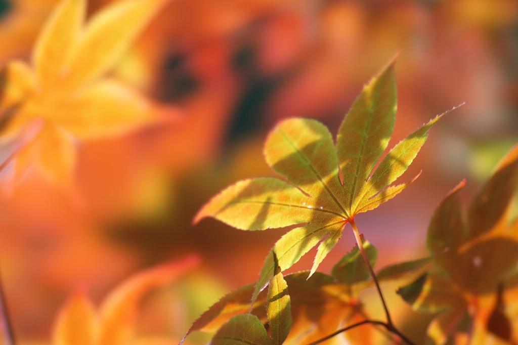 新緑紅葉1