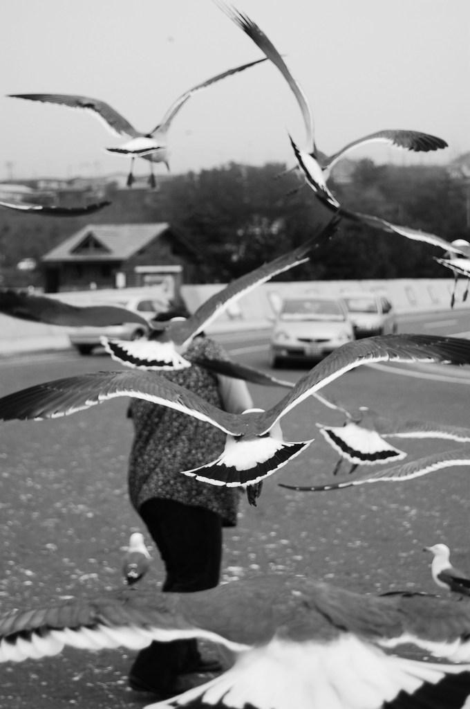 ヒッチコック 「鳥」