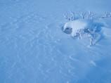 冬の北横岳にて(Scene13/40)