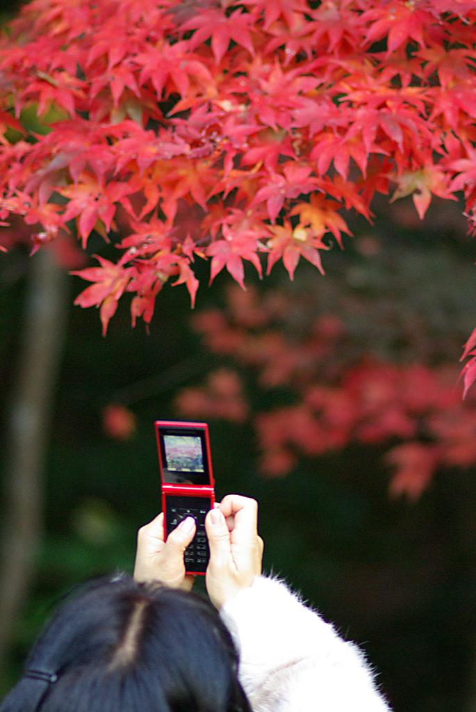 携帯も秋色_IMGP1112