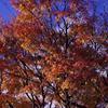 秋の装い_IMG3308