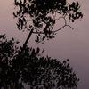 Tree_IMG2563