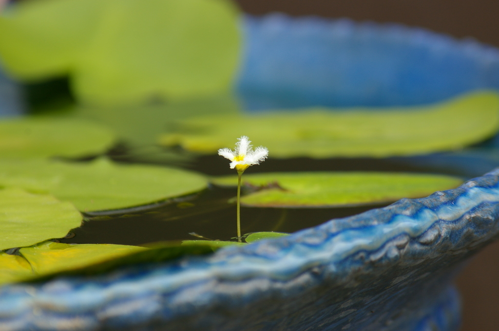 大きな器に小さな花