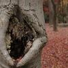おばけの木