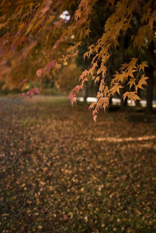 deep in autumn