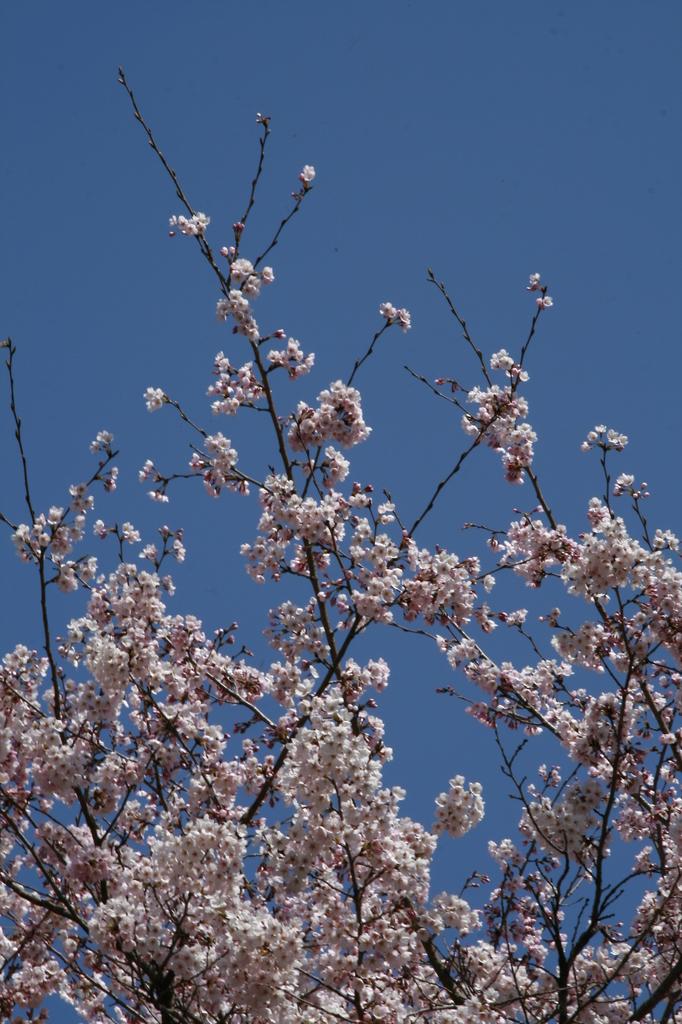 春の日差しを感じて_MG_0002