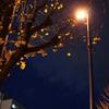 銀杏と街燈