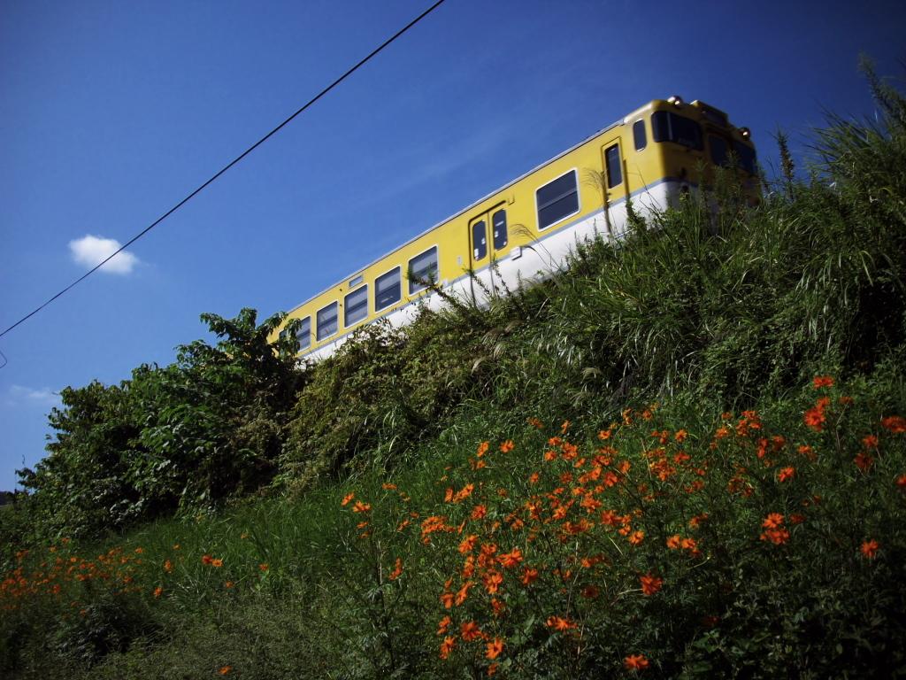 黄色い花の咲く土手