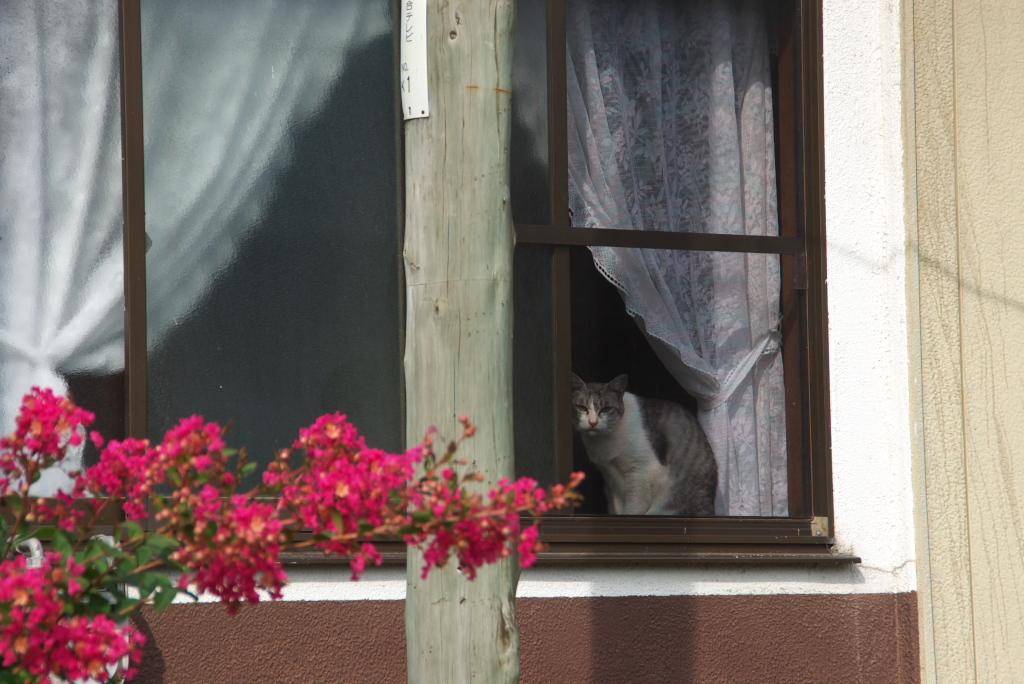 窓際のネコちゃん