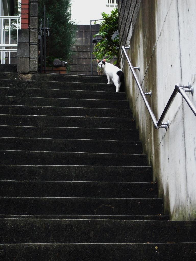 階段の向こう