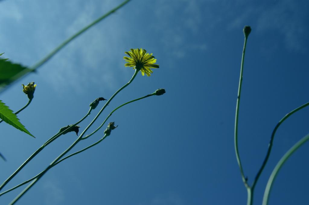 夏と花と空