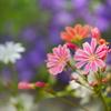 高山植物園の花