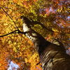 見上げれば秋