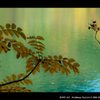 エメラルドグリーンの泉