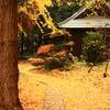 金色の絨毯