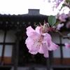 鎌倉 光則寺