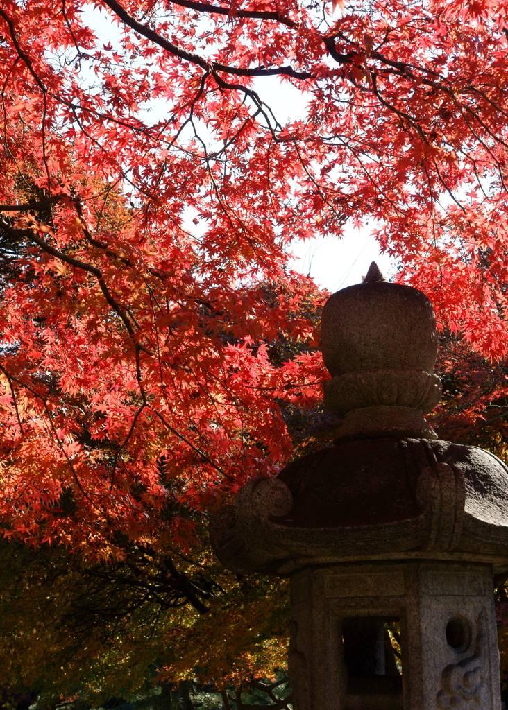 灯篭と紅葉