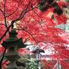 紅葉の大雄山