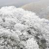 ナベ谷の霧氷(久住山系)