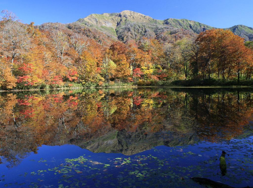 苅込池の秋