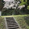 石段 と 桜