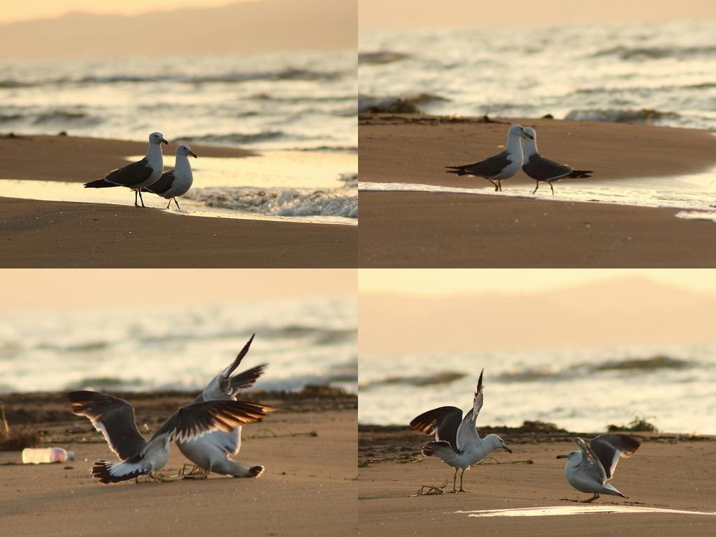 海鳥のデート