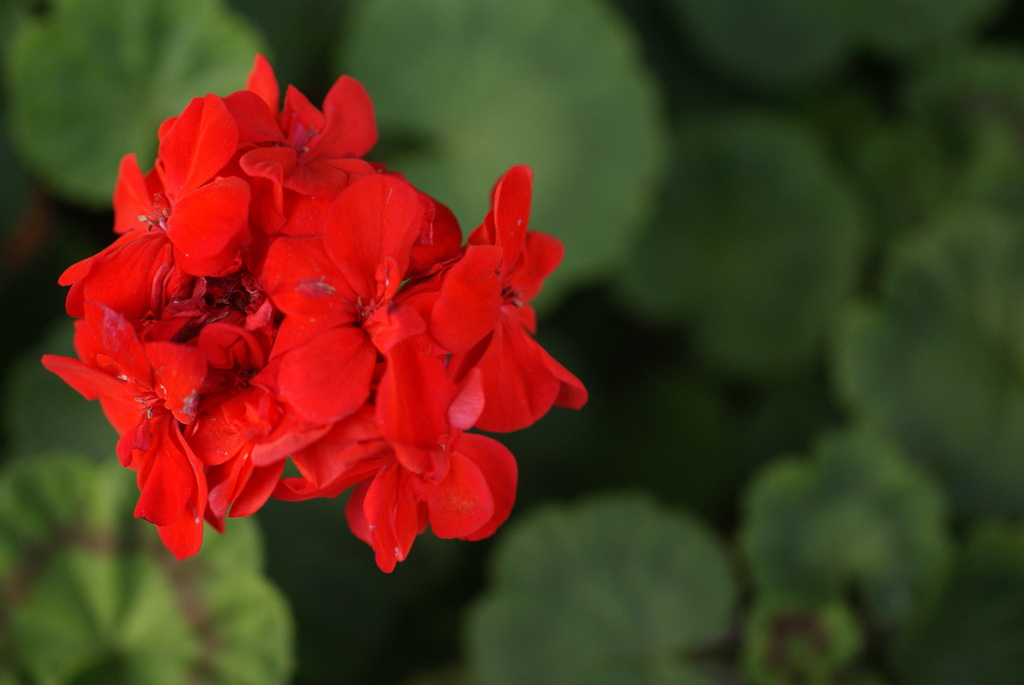 真冬の赤い花