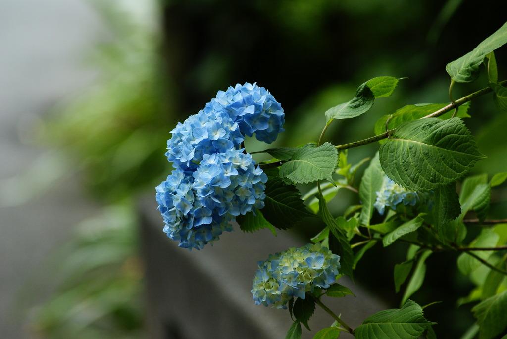 being bloomy
