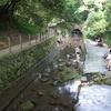 柿田川湧水池で遊ぶ子供