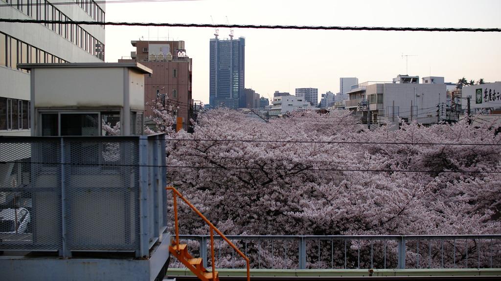 sakura platform