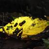 輝く落ち葉