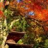 紅葉からの眺め