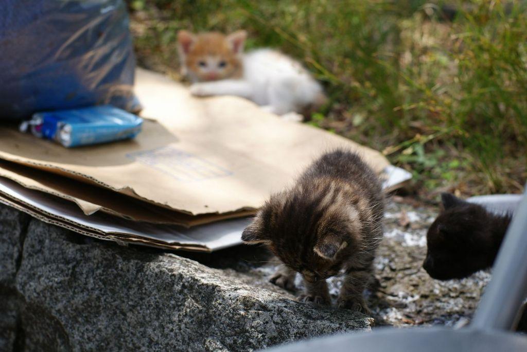 上野の子猫