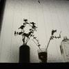窓辺の草花