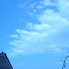 ハトと、雲と、蔓