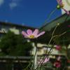 花と空と雲