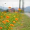 路傍の橙花