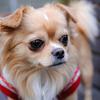 愛犬「ロコ」