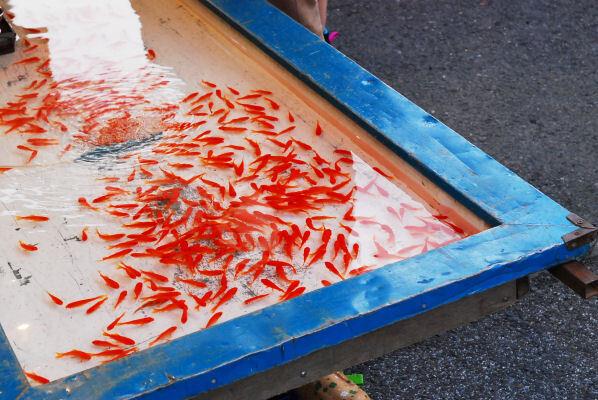 金魚の屋台