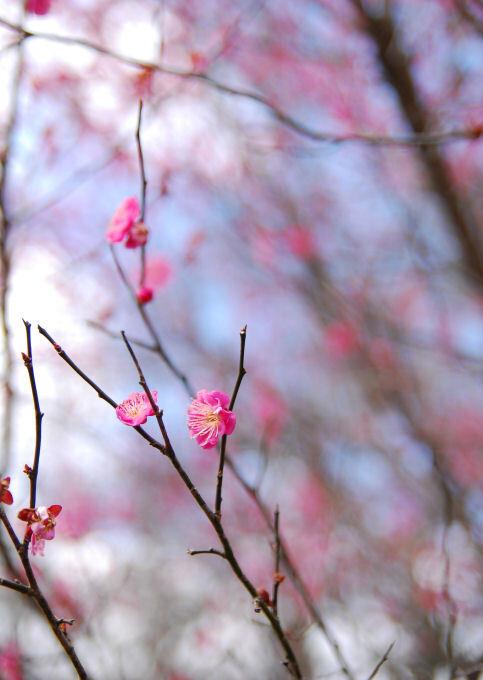 春先を感じる。