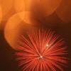 夏に咲く赤雲丹